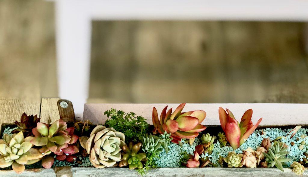 新所沢の埼玉住建 デザインにこだわったリフォーム.リノベーション 店舗デザイン DIY 空間演出 植栽 多肉植物の写真